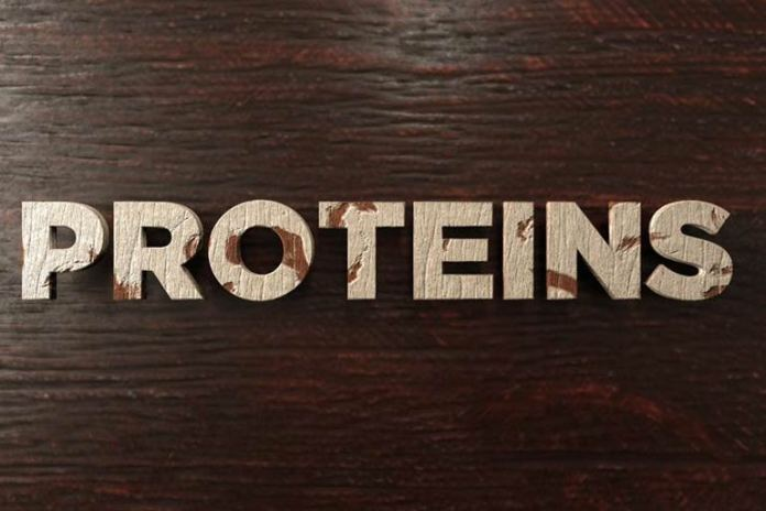Proteins Can Help Heal Adrenal Fatigue