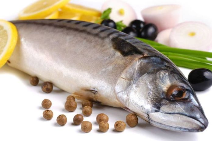 This type of mackerel is safe to eat