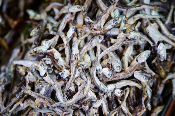 Anchovies have the least amount of poisoning effect