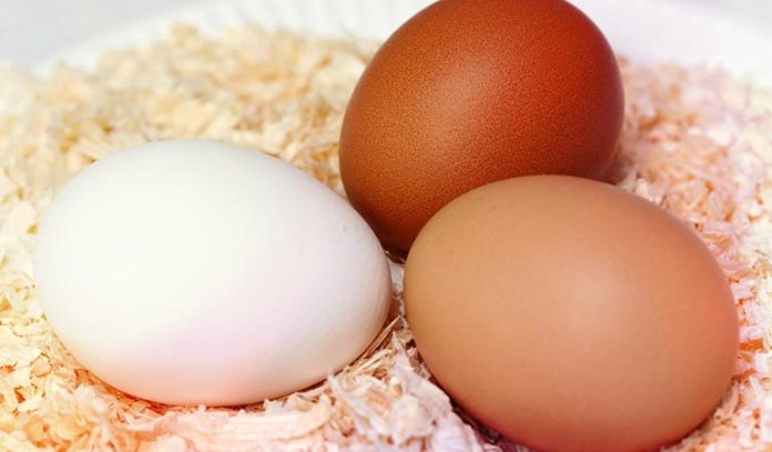 Eggs are beneficial for those who are tolerant to eggs