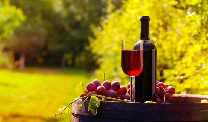 Red grapes have powerful anti-aging properties