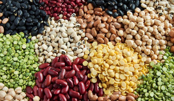 Legumes and lentils, gluten-free pea protein, hemp protein, seeds, and nuts are good sources of protein for vegans.