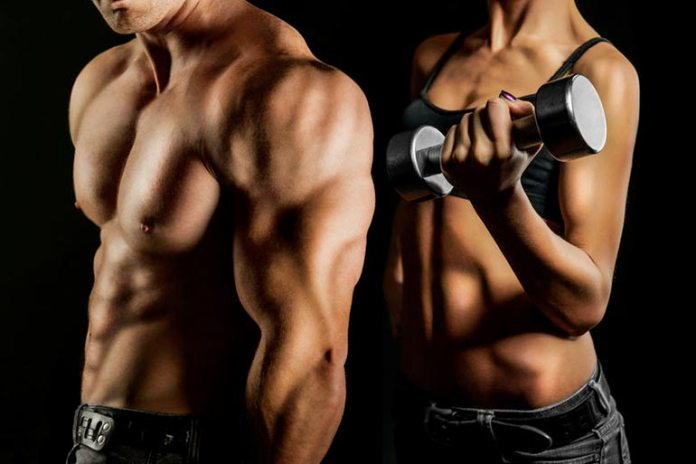 collagen for muscle building