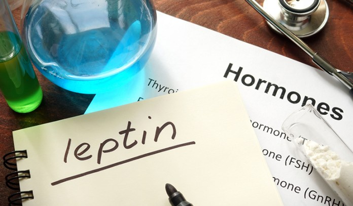 Leptin suppresses appetite