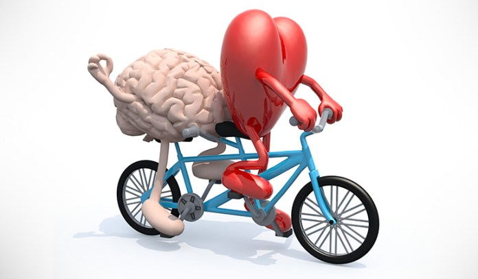 A healthy heart is key to cognitive health.