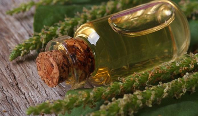 Plantain herb has anti-inflammatory, analgesic, and many healing properties