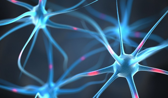Caffeine fires neural activity in the brain by blocking the activity of adenosine, a sleep-inducing neurotransmitter.