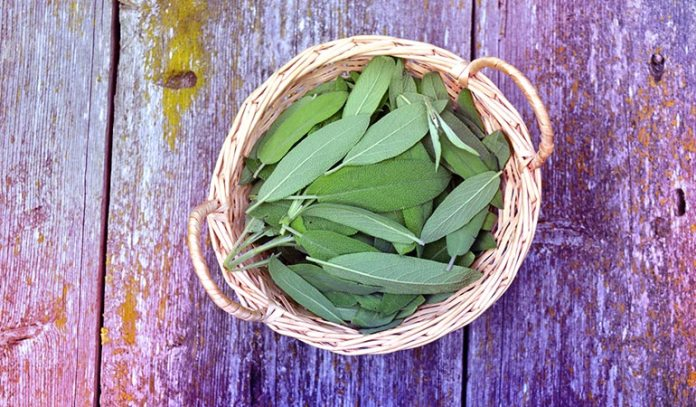 Sage can reduce period cramps and hot flashes during menopause