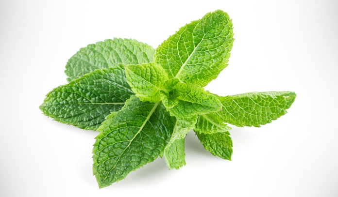 Peppermint leaves prevent bad breath.