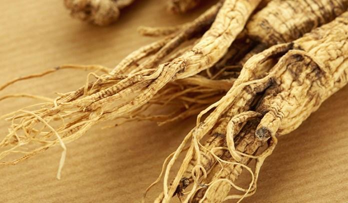 Ginseng Greatly Enhances Immunity