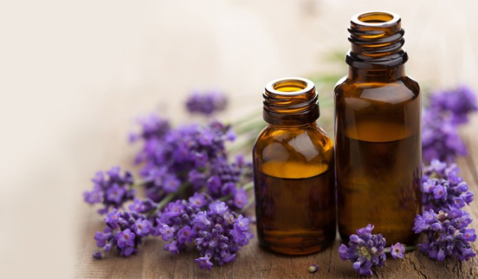 Lavender oil reduces stress, anxiety, and headaches