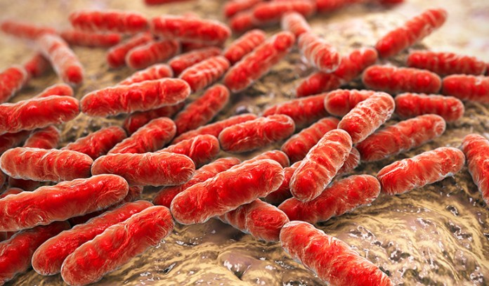 Isolated probiotic bacteria may help solve health issues