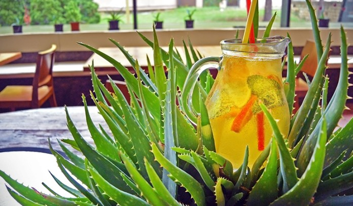 Aloe Vera, mint, honey and lemon make a potent detox drink that can combat acne