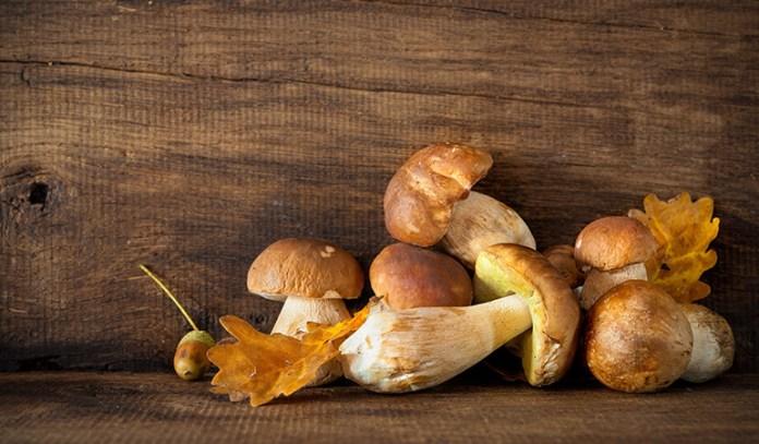Porcini mushrooms are rich in antioxidants.