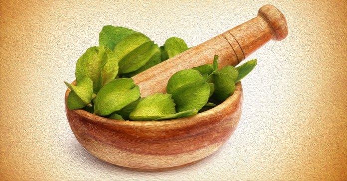 Health benefits of arjuna herb.