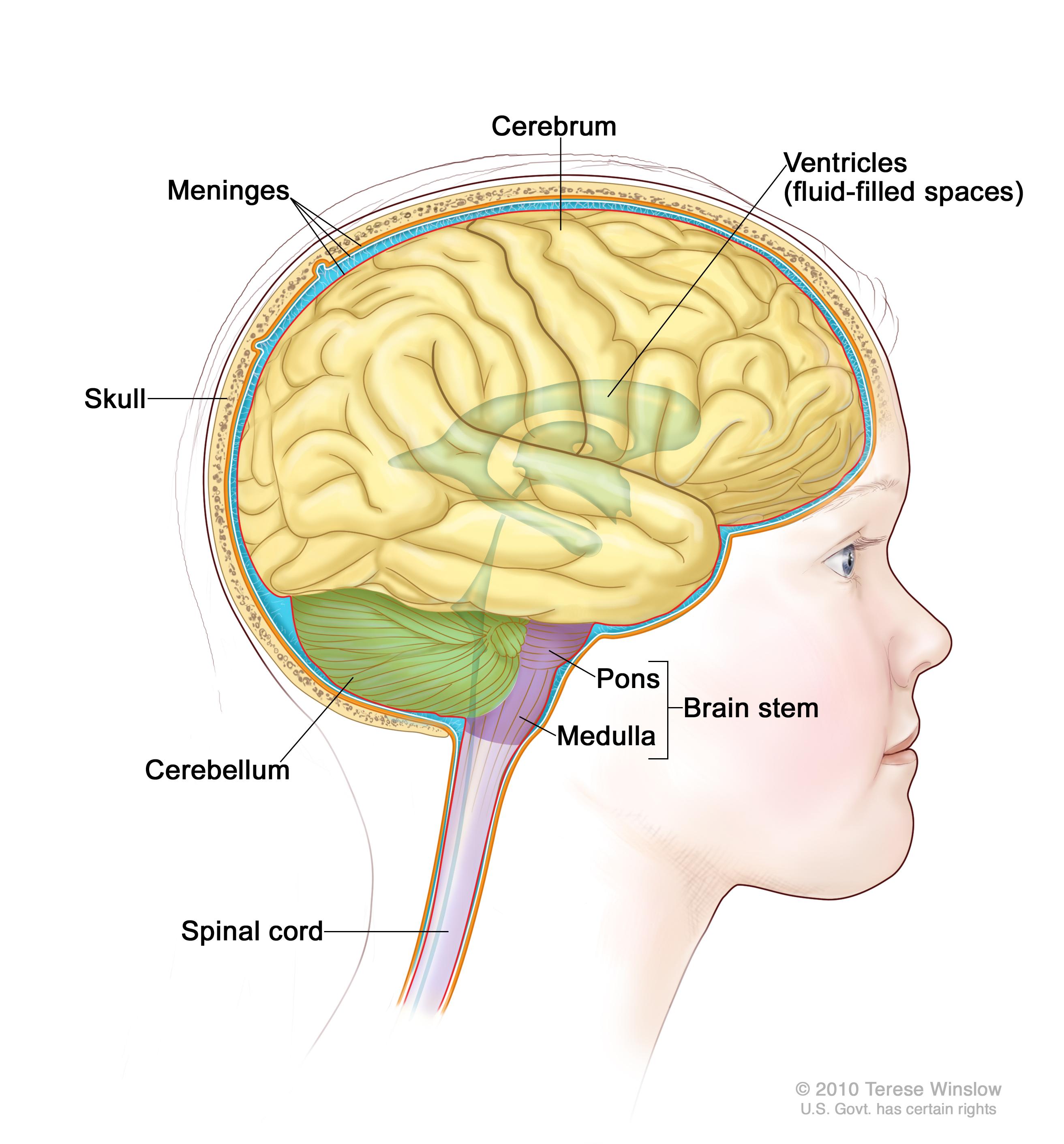 Childhood Brain Stem Glioma Treatment Pdq