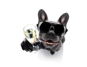 グラサンを付けた犬とシャンパン