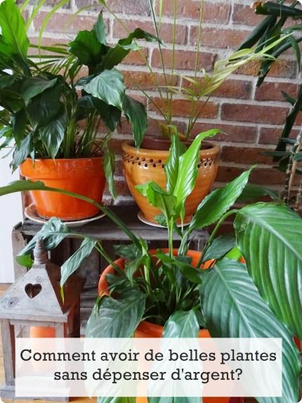 plantes beauté