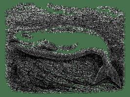 beluga-gravure-curiologie