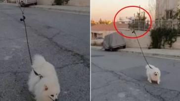 homem usou um drone para levar cachorro para passear