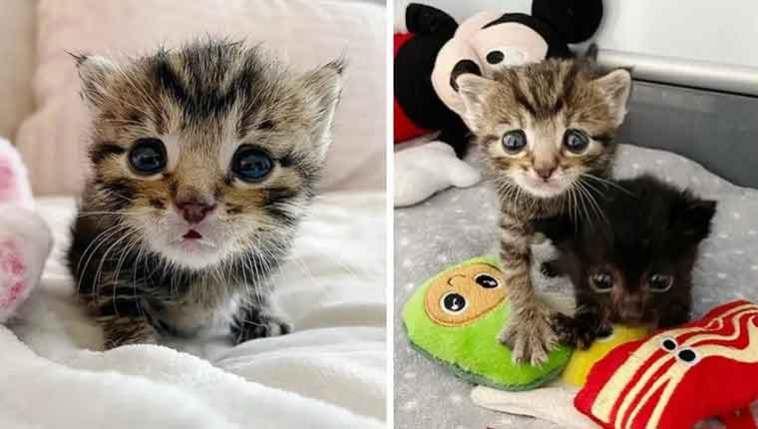 dupla-de-gatinhos