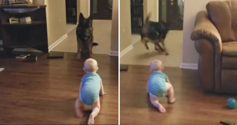 Cachorro e bebê se revezam