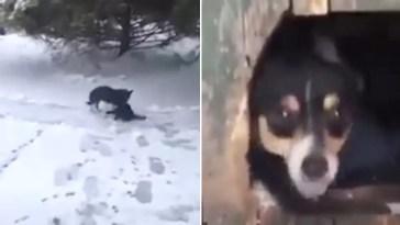 Cachorro encontra gato congelando