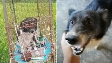 Cachorro era mantido preso