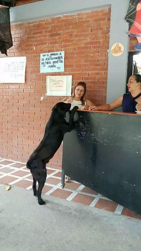 Cachorro tenta comprar comida com folhas ao ver pessoas usando dinheiro