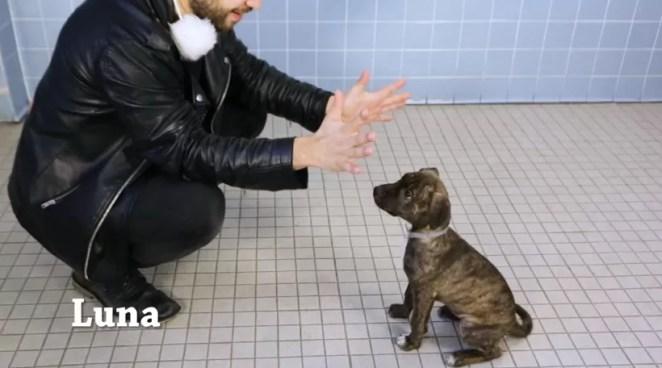 Mágico faz truques para cachorros de abrigo