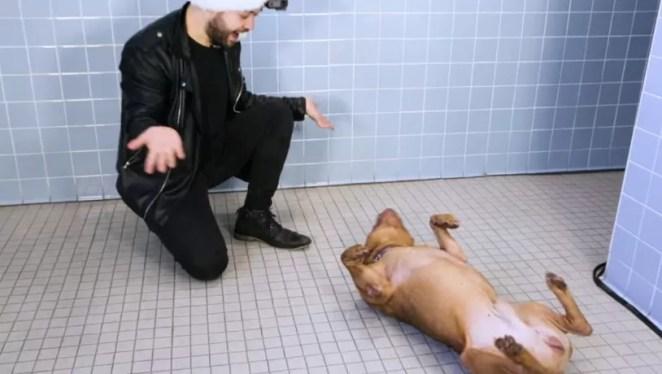Mágico faz truques para cães de abrigo