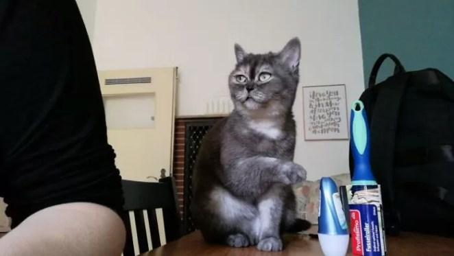 gata chamada de feia