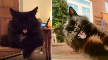 gatinho roqueiro