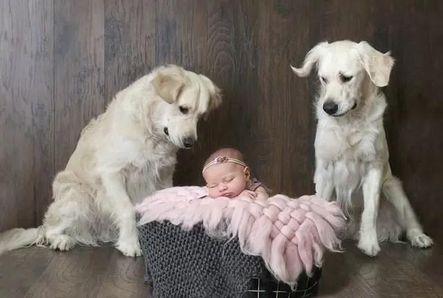 Cachorros acordam bebê e o convencem a roubar lanches