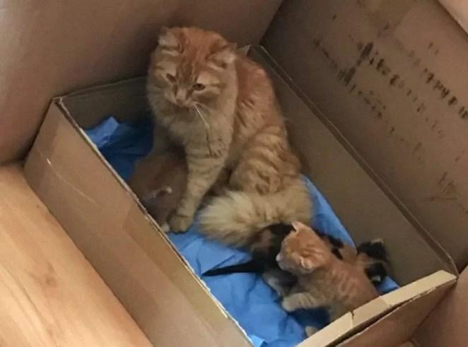 Gata leva filhotes ao hospital salvar