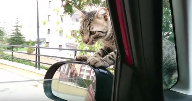 Gatinho de rua invade o carro de uma