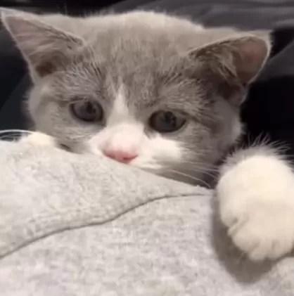 filhote de gato fofo