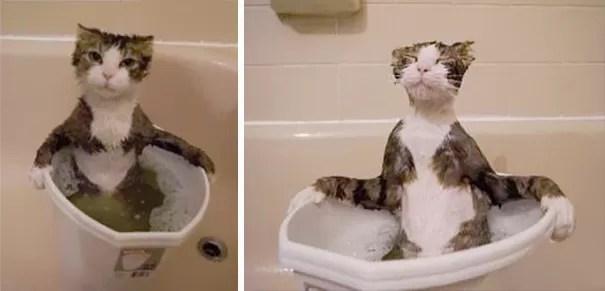gato apaixonado por água