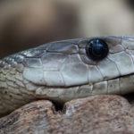 VIDEO: Pasajero atrapa y mata con sus propias manos a una serpiente que desató el pánico en un tren