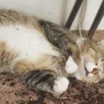 Así quedaron estos gatos tras comerse las plantas de marihuana de su dueña