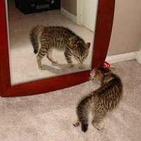 Tierno Gatito juega delante de espejo con su propio reflejo