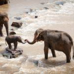 Si los elefantes desaparecen