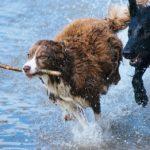 Los humanos hemos alterado el cerebro de los perros