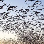 La población de aves se reduce drásticamente