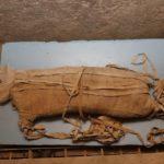 Momias de cachorro de león descubiertas en Egipto