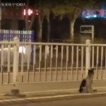 Un perro lleva 80 días en la carretera donde murió su dueña