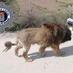 Un perro con apariencia de león siembra el pánico en Molina de Segura