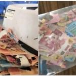 Termitas devoran los ahorros de una abuela en Indonesia