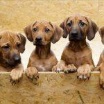 21 Curiosidades sobre los perros que deberías conocer