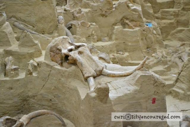 Travel with Kids to South Dakota, Visit Mammoth Site, Family Travel, South Dakota